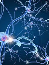 2018 – La rencontre des neurosciences et des masques